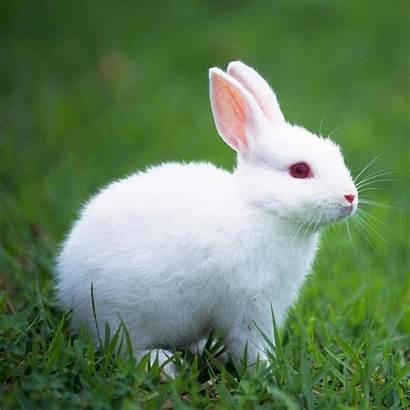 Rabbit Wallpapers Animals