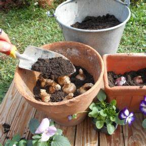 Planter Des Bulbes : conseils de jardiniers ~ Dallasstarsshop.com Idées de Décoration
