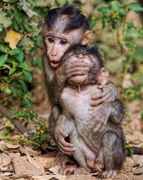 Gazgas Monkey 110 Image by 266 Best Changos Monkey 1 Images On