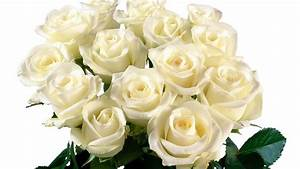 Beautiful White Roses Wallpaper - WallpaperSafari