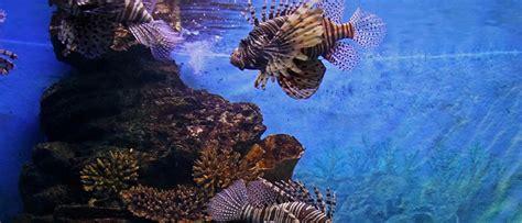 sea aquarium entrance fee skegness sea bangkok world ticket bangkok siam world ticket bangkok siam world