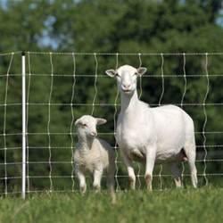 Permanet U00ae 10  48  6 Electric Netting For Sheep