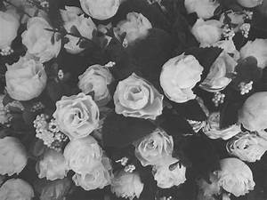 tumblr backgrounds black and white roses - Google Search ...