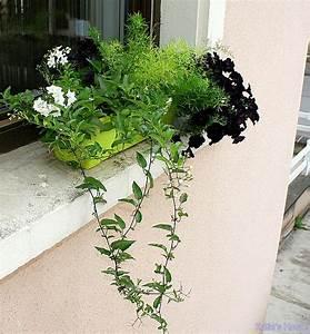 Fleur D Hiver Pour Jardinière : fleurs jardiniere ete ~ Dailycaller-alerts.com Idées de Décoration