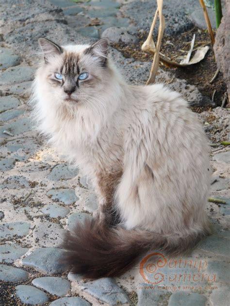 persian cats catnip camera