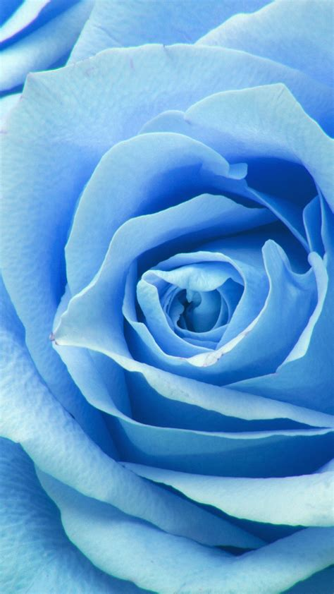 ne flower blue rose zoom love wallpaper
