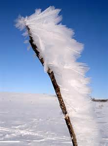 Ice Wind Feathers