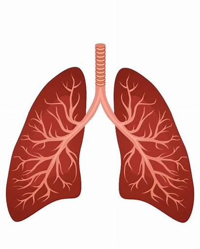 Lung Respiratory System Clipart Background Lungs Sacs
