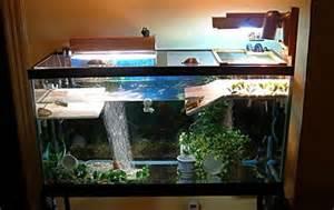 Turtle Tank Decoration Ideas
