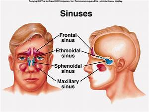 How Chiropractic Can Relieve Your Sinus Problems