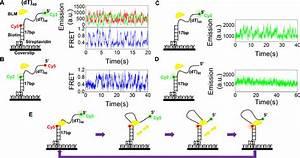 BLM reels in ssDNA periodically. ( A,B ) Single-molecule ...