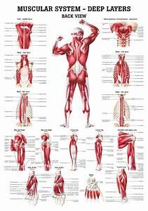 shoulder relief support system