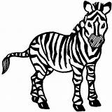 Zebra Coloring Pages Printable Animal Animals Clip Clipart Colouring Draw Baby Line Drawing Print Zebras Theatre Drawings Graphics Childrens Clipartbest sketch template