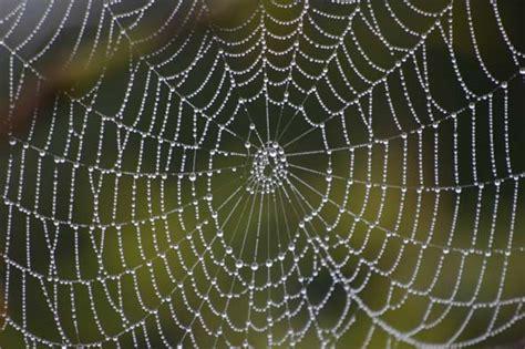 cr 233 ation de vers 224 soie transg 233 niques produisant du fil de toile d araign 233 e l atelier