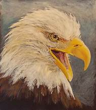 American Eagle Head Drawing