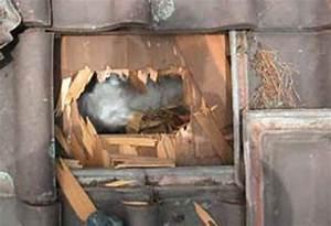 Marder Im Dach Vertreiben : haben sie wirklich einen marder auf dem dachboden ~ Orissabook.com Haus und Dekorationen