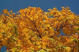 Kostenlose Bilder Herbst : kostenlose foto baum ast himmel sonnenlicht blatt blume golden herbst bunt gelb ~ Yasmunasinghe.com Haus und Dekorationen