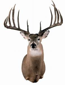 20 Biggest Typical Whitetail Bucks of All Time - Petersen ...