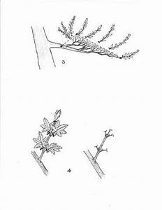 47 best images about bonsai penjing on pinterest With wiring bonsai roots