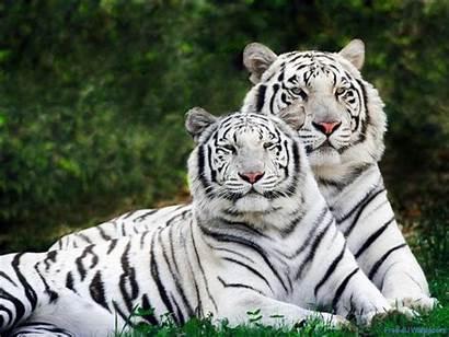 Wild Wallpapers Animals Animal Desktop Wallpapersafari Code