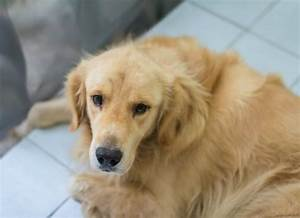 Inflammation Of The Esophagus In Dogs