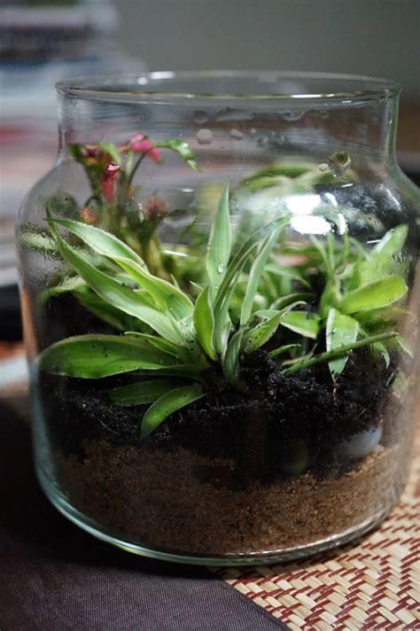 สวนในขวดแก้วกับแปรงสีฟันฤาษี - Pantip