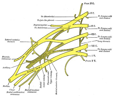 Brachial Plexus Anatomy. How To Start A Plumbing Business. Harvard Private Equity Conference. Monster Jam Truck For Sale Mac Voice To Text. Home Laser Hair Removal Review. Business Checking Account Free. Cna Classes In Stockton Ca Work Injury Lawyer. How To Buy Gold In Dubai Auto Collision Lawyer. The Best Cable And Internet Packages