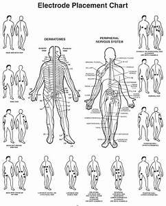 Tens Unit Body Diagram