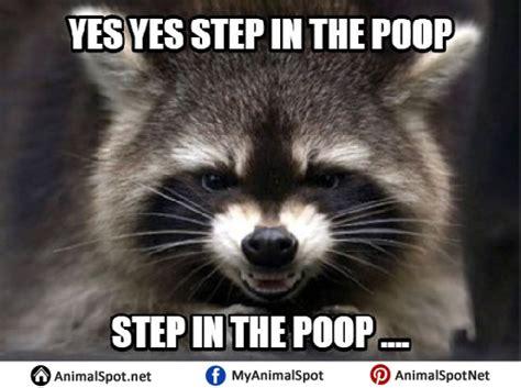raccoon memes
