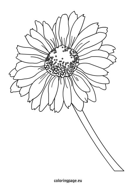 Daisy coloring page – Coloring Page