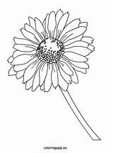 Daisy Coloring Gerbera Rose Petal Flower Colouring Printable Flowers Yellow Getcolorings Sheets Princess Epic sketch template
