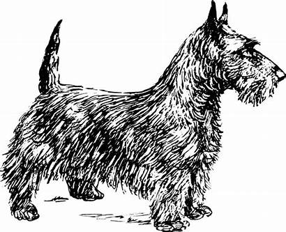Terrier Dog Scotch Clipart Bw Clip Vector