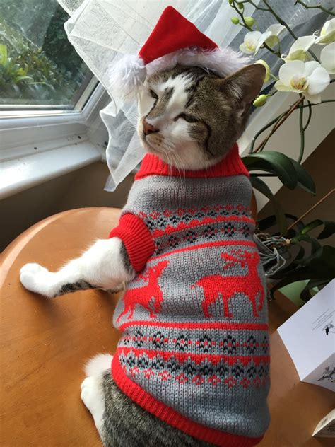 cat sweaters for cats are dressing cats in adorable sweaters