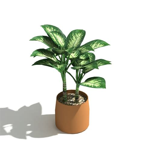 Indoor Tropical Plants Upright Inc 100 In Door Plant