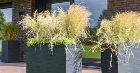 Winterharte Kübelpflanzen Schattig by Winterharte K 252 Belpflanzen F 252 R Balkon Garten Und Terrasse