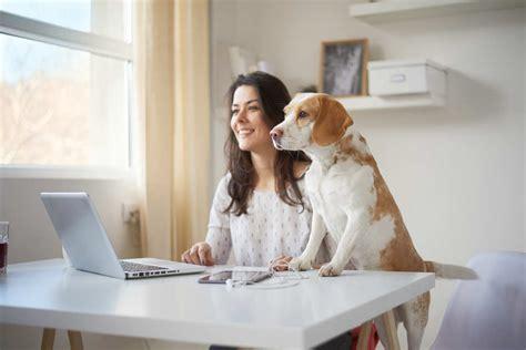 animali in ufficio cani in ufficio italia ecco le aziende in cui sono