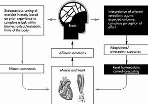 Complex Systems Model Of Fatigue  Integrative Homoeostatic Control Of Peripheral Physiological