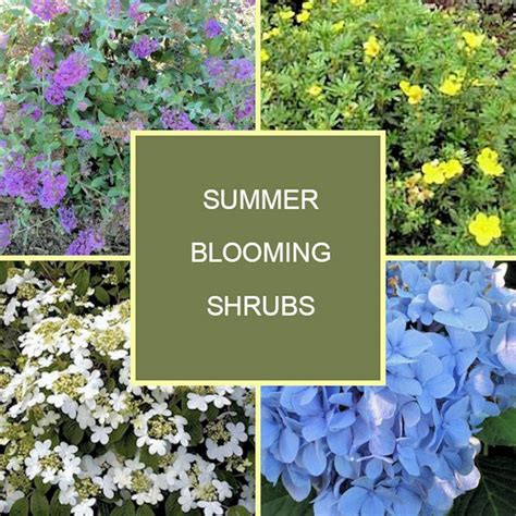 shrubs that bloom all summer a guide to northeastern gardening 18 summer blooming shrubs for your garden