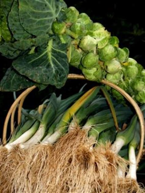 producing winter vegetable garden lovetoknow