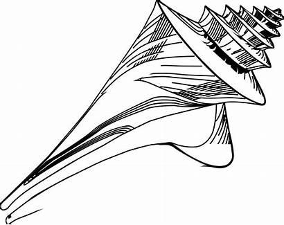 Seashell Clipart Starfish Sea Shells Dollar Drawing