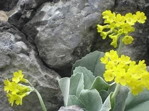 Was Sind Frühlingsblumen : fr hlingsblumen im watzmanngebiet enzian schusternagein ~ Whattoseeinmadrid.com Haus und Dekorationen