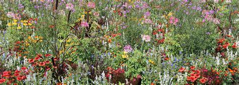 Garten Landschaftsbau Pankraz by Pflanzen Und Vegetation Pankraz Galabau Garten