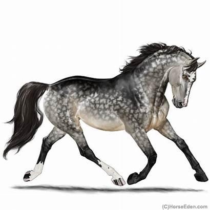 Horse Eden Dappled Stallion Gris Grullo Smokey