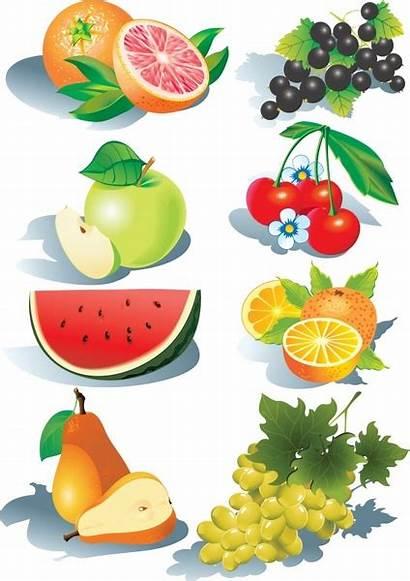 Fruit Fruits Vector Clipart Clip Cliparts Svg