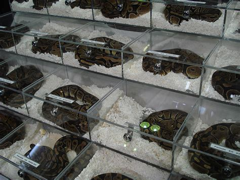The Art Of Setting Up A Ball Python Cage Zerorez Carpet Cleaning Process How Do You Remove Wax Off Cleaners Kailua Kona Stains Out Of Berber Barn Poole Opening Times I Take Candle Gallery Central Park Avenue Yonkers Ny Dust Mite Sydney