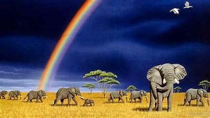 Elephant Wallpapers Screensavers Animal Desktop Backgrounds Computer