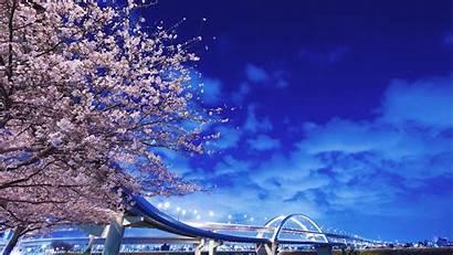 Japan 1080p Sakura Background Bridge Japanese Wallpapers