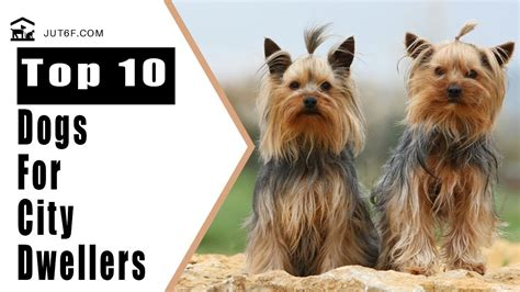 Best Appartment Dogs by Best Breeds For Apartments Top 10 Best Breeds