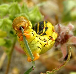Welcome To Animal Cognizance  Photographs Of Caterpillars