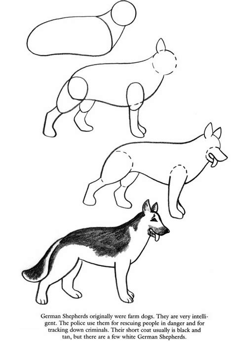 draw dogs pages laynees drawing tips drawings